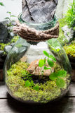 Closeup of wonderful jar with live forest Royalty Free Stock Photography