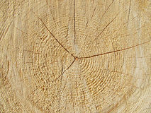 Closeup of wood. Close photo of surface of cut wood with annuli and cracks Royalty Free Stock Image