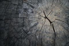 Closeup wood texture. Annual rings of tree stump cut down from nature. Royalty Free Stock Photography