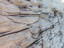 Closeup of wood texture, wood decay Stock Images