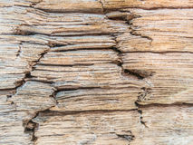 Closeup of wood texture, wood decay Royalty Free Stock Photo