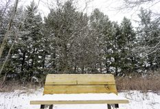 Closeup of wooden bench covered with snow in a tall pine forest, Stock Image