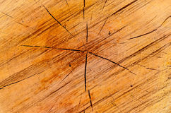 Closeup of wooden cut texture Royalty Free Stock Photos