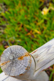 Closeup wooden fance and plants Stock Images