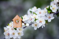 Closeup wooden house with hole in form of heart surrounded by white flowering branches of spring trees stock photo