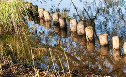 Row of wooden poles in water Royalty Free Stock Images