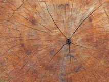 Closeup wooden texture for background Royalty Free Stock Images