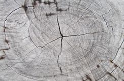 Closeup wooden tree cutting trunk backgrounds,natural tree ring cut stump wooden texture and timber patterns. stock photo