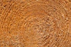 Closeup wooden trunc texture Stock Photos