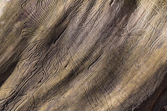 Closeup wormhole in wooden Stock Images