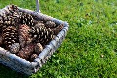 Closeup of a woven basket of pine cones Royalty Free Stock Photos