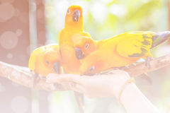 Closeup yellow canary bird, made with color filters Stock Photo