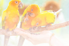 Closeup yellow canary bird, made with color filters Stock Image