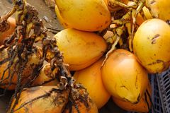 Closeup of yellow coconuts For Sell On Street. Closeup of fresh yellow coconuts For Selling On Public Street Royalty Free Stock Photography