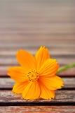 Closeup yellow daisy flower Stock Photography