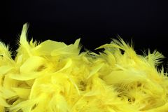 Yellow feathers on black background. Closeup of yellow downy feathers fine texture, black background, copyspace Royalty Free Stock Photography
