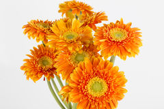 Closeup of yellow flower Royalty Free Stock Image
