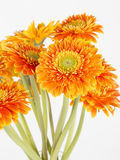 Closeup of yellow flower Stock Images