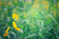 Closeup yellow flower blued nature background Stock Photography