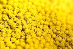 Closeup of a yellow flower royalty free stock images