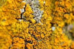 Closeup of a yellow mushroom Stock Photo