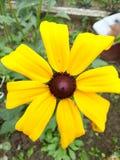 Closeup yellow petals Stock Photos