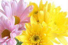 Closeup of yellow and pink flowers Stock Photo