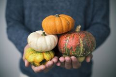 Man with pumpkins in his hands. Closeup of a young caucasian man with an assortment of different pumpkins in his hands stock images