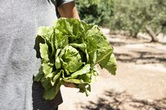 Young man with a romaine lettuce Stock Photos