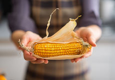 Closeup on young housewife showing corn Stock Photography