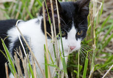 Closeup of a Young Kitten. In the Grass Royalty Free Stock Photo
