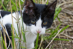 Closeup of a Young Kitten. In the Grass Royalty Free Stock Images