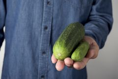 Big and small cucumber in the hand of a man. Closeup of a young man holding a big cucumber next to a smaller one in his hand Royalty Free Stock Image
