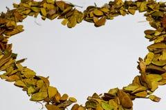 Closeupbakgrund av hjärta/förälskelsedesignen isolerade Autumn Leaves - stället för din design, text arkivfoto