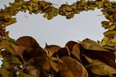 Closeupbakgrund av hjärta/förälskelsedesignen isolerade Autumn Leaves - stället för din design, text fotografering för bildbyråer