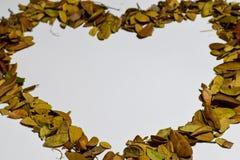 Closeupbakgrund av hjärta/förälskelsedesignen isolerade Autumn Leaves - stället för din design, text royaltyfri foto