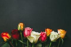 Closeupbakgrund av rosa färger, röda vita rosor Royaltyfri Fotografi