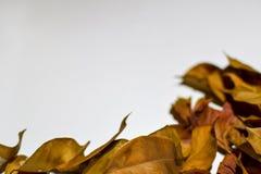 Closeupbakgrundsdesignen isolerade Autumn Leaves - stället för din design, text royaltyfri foto