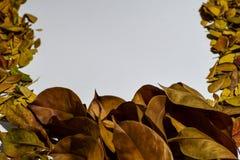 Closeupbakgrundsdesignen isolerade Autumn Leaves - stället för din design, text royaltyfria foton