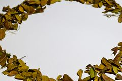 Closeupbakgrundsdesignen isolerade Autumn Leaves - stället för din design, text arkivfoton