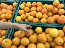 Closeupbild av en kvinna som väljer tangerin eller apelsiner Arkivfoton