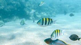 Closeupbild av massor av färgrika fiskar som simmar runt om korallreven Perfekt skott för att illustrera den marin- naturen eller arkivbilder