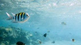 Closeupbild av massor av f?rgrika fiskar som simmar runt om korallreven Perfekt skott f?r att illustrera den marin- naturen eller arkivfoton