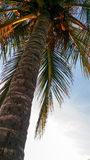 Closeupbild av palmträdet på gryning Fotografering för Bildbyråer