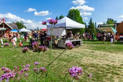 Closeupbild av purpurfärgade hogweed blommor med samtal för många personer arkivfoto