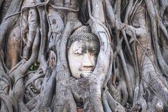 Closeupbilden av den buddha bilden inom det Bodhi trädet rotar i Ayutthaya Royaltyfri Fotografi