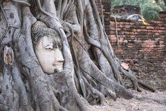 Closeupbilden av den buddha bilden inom det Bodhi trädet rotar i Ayutthaya Arkivbilder