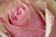 closeupblomma Arkivfoto