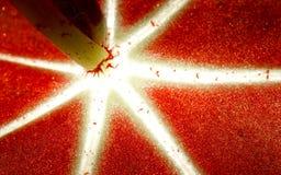 Closeupblommablad Royaltyfri Bild
