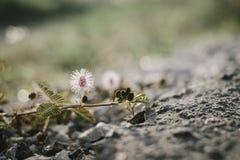 Closeupblommor kärnar ur på jordning Arkivfoton
